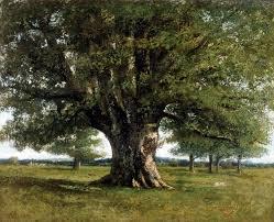 chêne Courbet