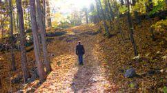marcheur-de-forêt-d-automne-6791783