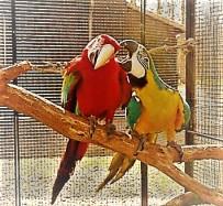 perroquets-en-cage