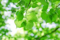 9609964-printemps-des-feuilles-sur-une-branche-d-arbre-banque-dimages